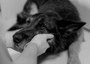social media marketing agency FOR Veterinary